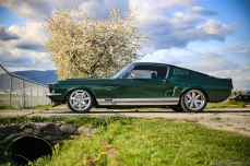 My good friend Tom Thu's Roush Coyote powered 67 Mustang GT. The car has been his since he was 11 years old and has gone through several different configurations.